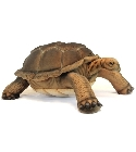 jouets Peluche tortue Galapagos Anima 145 cm